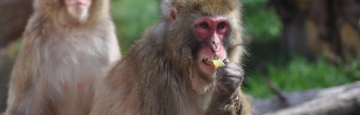 Snow Monkey Favorites 43